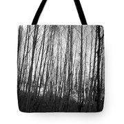 Black And White Birch Stand Tote Bag