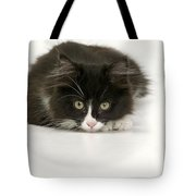 Black-and-white Cat Tote Bag