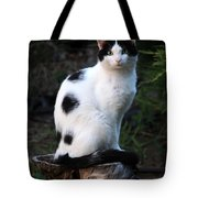 Black And White Cat On Tree Stump Tote Bag
