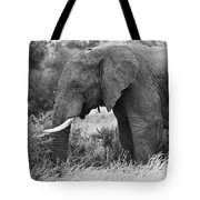 Black And White Elephant Tote Bag