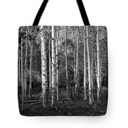 Black And White Photograph Of Birch Trees No. 0126 Tote Bag