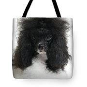 Black And White Poodle Tote Bag