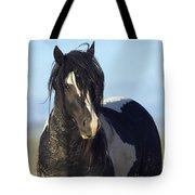 Black And White Stallion Comes Close Tote Bag