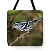 Black And White Warbler Tote Bag