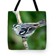 Black-and-white Warbler Mniotilta Varia Tote Bag