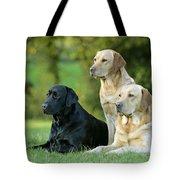 Black And Yellow Labrador Retrievers Tote Bag
