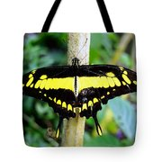 Black And Yellow Swallowtail Butterfly Tote Bag