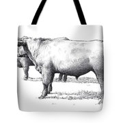 Black Angus Steers On Almshouse Road Tote Bag by William Beauchamp