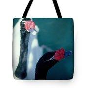 Black Beaked Swans Tote Bag