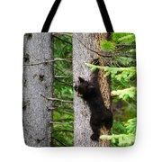Black Bear Cub Climbing A Pine Tree Tote Bag