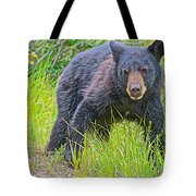 Black Bear Cub Near Road In Grand Teton National Park-wyoming Tote Bag