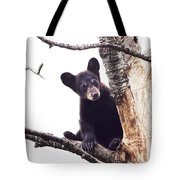 Black Bear Cub Up In A Dead Tree In Northern Minnesota Tote Bag
