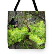 Black Bear Family In A Tree Tote Bag
