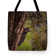 Black Bear In A Tree Tote Bag