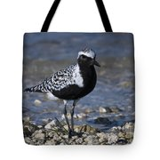 Black-bellied Plover No.2 Tote Bag