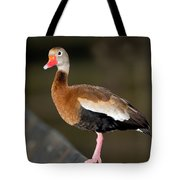 Black-bellied Whistling Duck Tote Bag