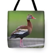 Black-bellied Whistling-duck Tote Bag