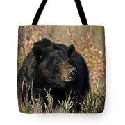 Black Bruin Tote Bag