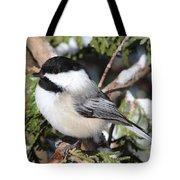 Black-capped Chickadee 9527 Tote Bag