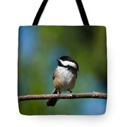 Black Capped Chickadee Perched On A Branch Tote Bag