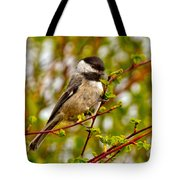 Black Capped Chickadee Tote Bag