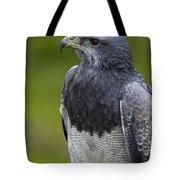 Black-chested Buzzard-eagle Tote Bag