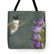 Black Chinned Hummingbird 2 Tote Bag