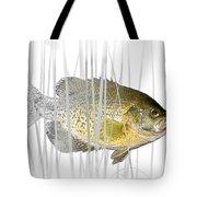 Black Crappie Pan Fish In The Reeds Tote Bag