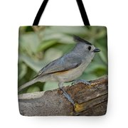 Black-crested Titmouse Tote Bag