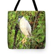 Black Crowned Night Heron Tote Bag
