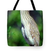 Black-crowned Night Heron Juvenile Tote Bag