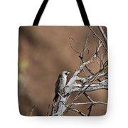 Black-faced Cuckoo Shrike Tote Bag