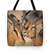 Black-faced Impalas Aepyceros Melampus Tote Bag