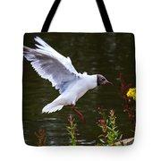 Black Head Gull - Preparing For Landing Tote Bag