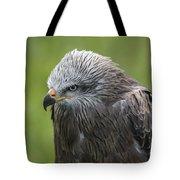 Black Kite 1 Tote Bag