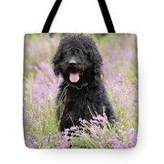 Black Labradoodle Tote Bag