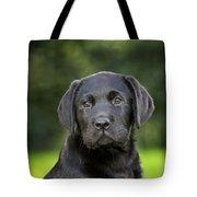 Black Labrador Puppy Tote Bag
