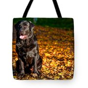 Black Labrador Retriever In Autumn Forest Tote Bag
