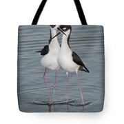 Black-necked Stilts Tote Bag