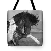 Black Pinto Stallion Strikes Out Tote Bag