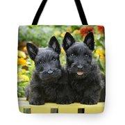 Black Scotties Tote Bag