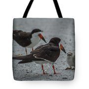 Black Skimmers Tote Bag
