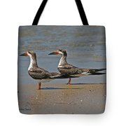 Black Skimmers On The Beach Tote Bag