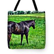 Black Stallion In Pasture Tote Bag