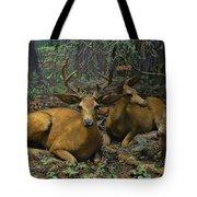 Black Tail Deer Tote Bag