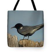 Black Tern Tote Bag