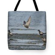Black Terns Tote Bag