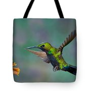 Black-throated Brilliant Tote Bag