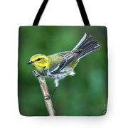 Black-throated Green Warbler, Female Tote Bag