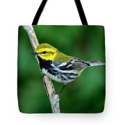 Black-throated Green Warbler, Male Tote Bag